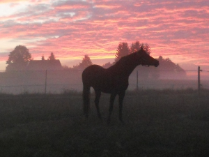 Pferdetraining Allgäu